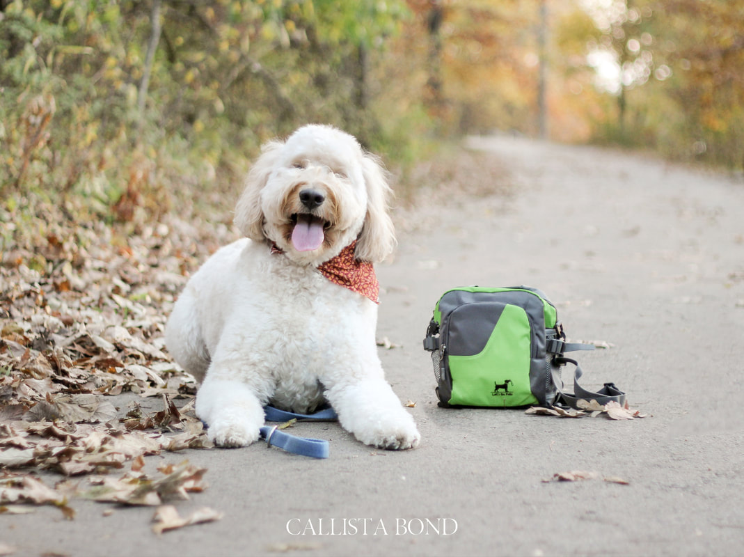 Callista Bond Photography, Callista Bond Photography, Kansas City Photographer, Wedding Photographer, Branding, Graphic Design, Product Photography, Product Photographer, Branding Photography, Personal Branding, Product Branding, Lets Go Fido, Let's Go Fido, Dog Walking Bag, Dog, Pet Walking Bag, Dog Walker, Amazon, KC Branding Photography, KC Product Photography, Kansas City Product Photographer,